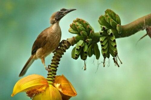 Fugl på banantræ