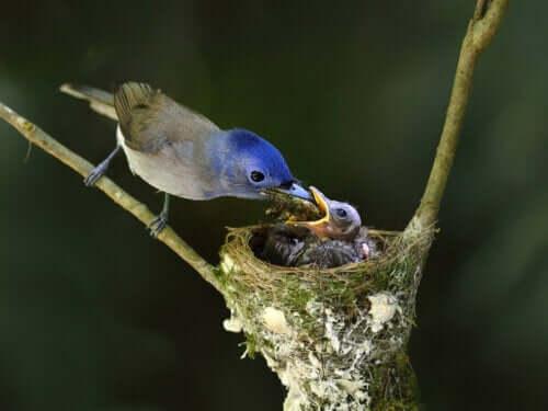 Fugl fodrer sin unge