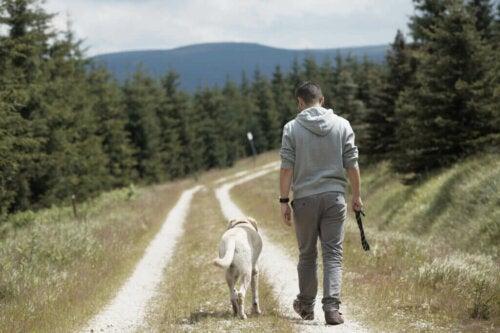 Hvorfor er det, at hunde følger deres ejere?