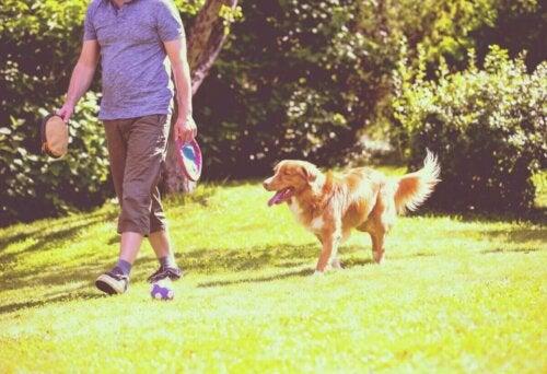 Eksempel på, hvordan hunde følger deres ejere