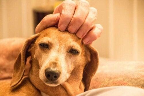 Animal Welfare Awards: Et godt initiativ