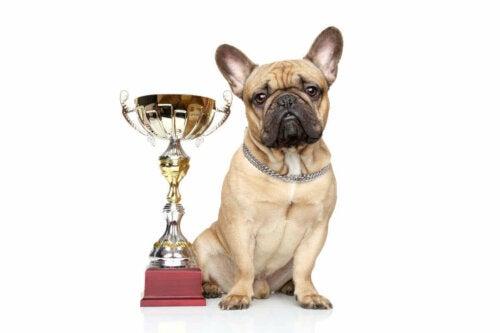 Hund med pris som eksempel på Animal Welfare Awards