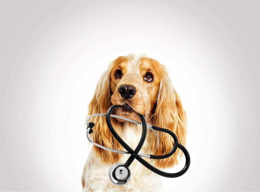 Fire årsager til væske i bughulen hos kæledyr