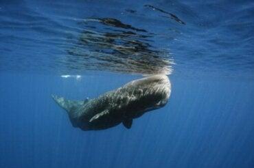 En hval blev reddet fra døden