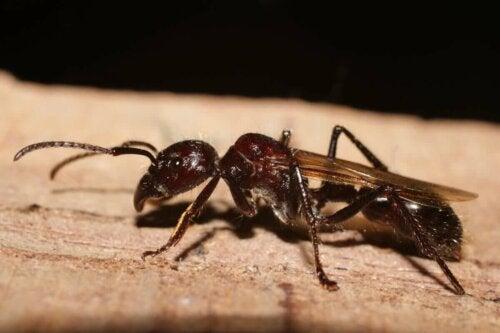 Myre på træ