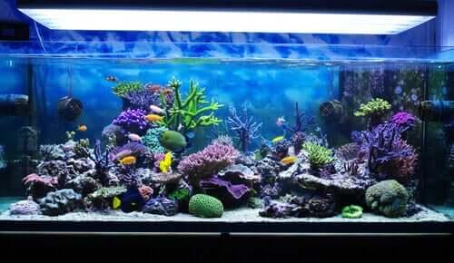 Sådan kan man passe et saltvandsakvarium