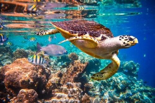 Hvordan er det, at strømme påvirker liv i havet?
