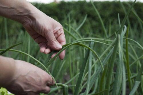 Hvad er agroøkologisk landbrug?