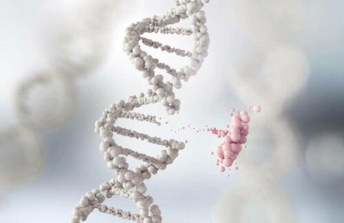 DNA illustrerer Lamarckisme