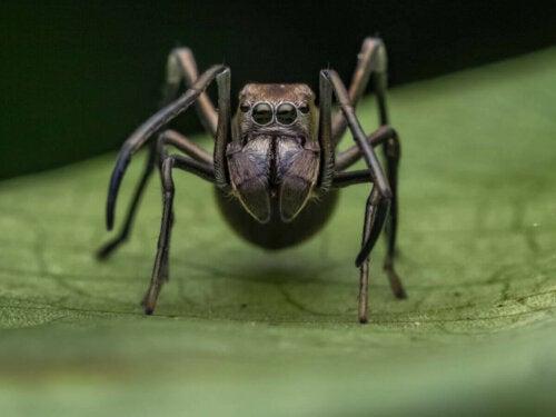 Edderkop på blad