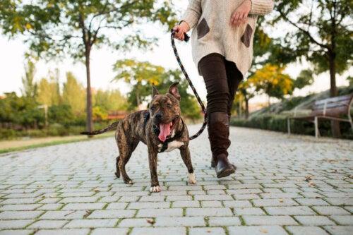 Eksempel på daglige gåture for hunde