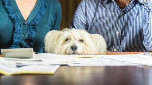 To personer og en hund ved et skrivebord