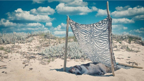 Hund ligger i skygge på strand for at undgå soleksem hos kæledyr