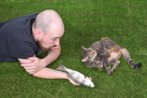 En kats sociale interaktion: 4 interessante fakta