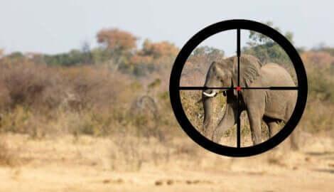 Krybskytte, som sigter mod elefant, viser behovet for at beskytte elefanter