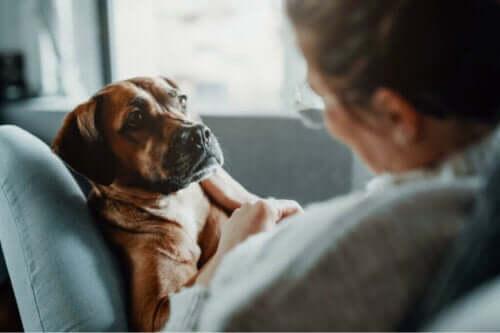 Tre forskellige behandlinger af lungebetændelse hos dyr