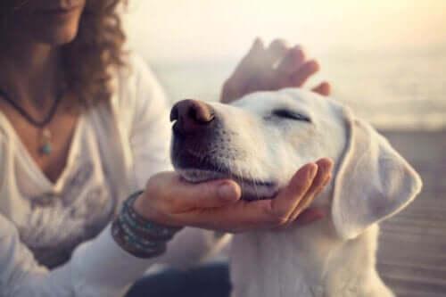 Vejrtrækningsproblemer: Åndenød hos kæledyr