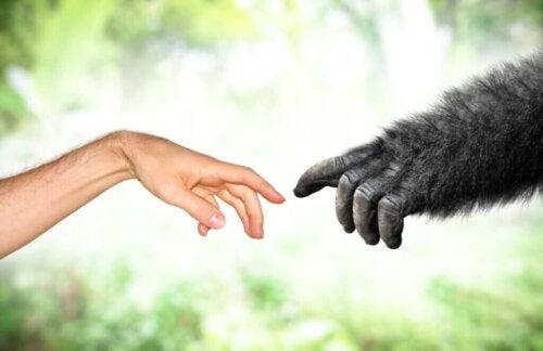 Lamarckisme i moderne tider: Evolutionsteorier