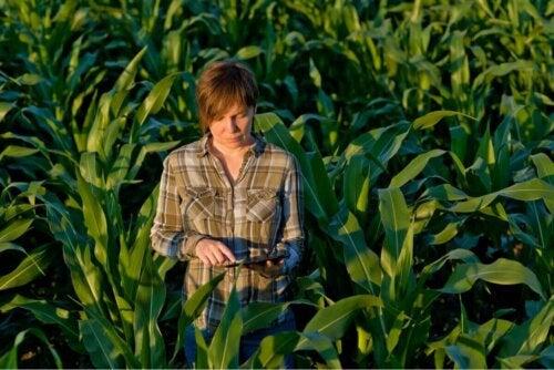 Person blandt afgrøder på agroøkologisk landbrug