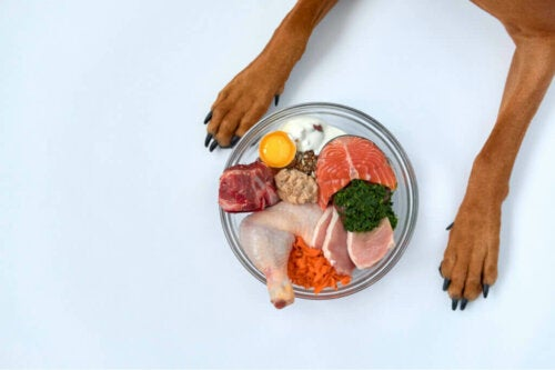 Hvorfor kan D-vitamin påvirke kæledyrs helbred?