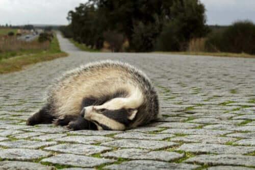 Økologiske fælder: Hvorfor er de et problem for dyr?