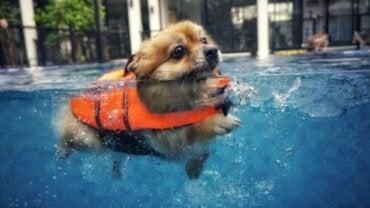 5 tips, hvis du ønsker at svømme med en hund