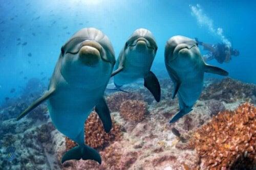 Er det sandt, at delfiner føler empati?