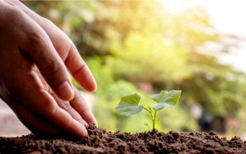 Hænder og en lille spise illustrerer menneskers indvirkning på miljøet
