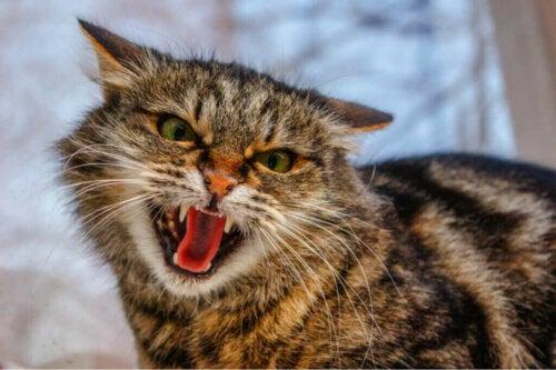 De 4 mest gængse adfærdsforstyrrelser hos katte