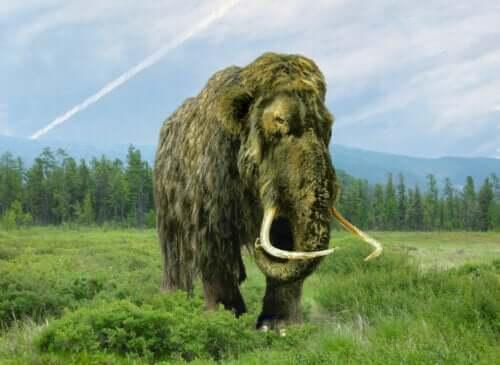 Tegning af mammut