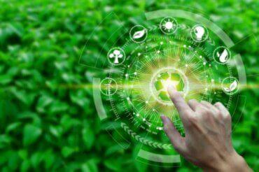 Hvad er et økosystems produktivitet?