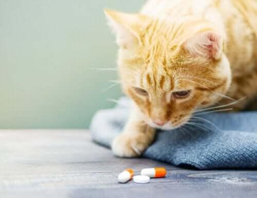 Sådan kan man give en kat medicin