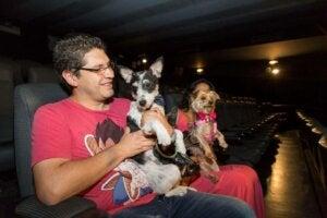 Mand til koncert for hunde