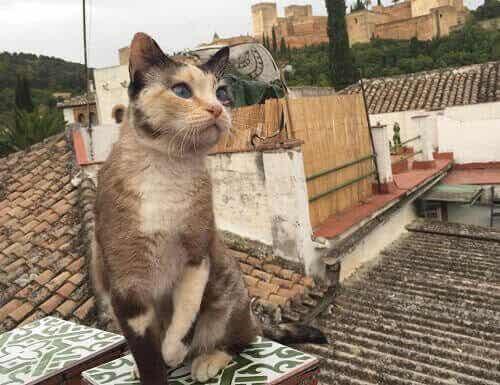 Historien bag kattene fra Alhambra