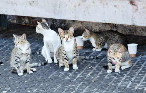 Kattene fra Alhambra