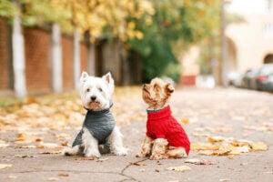 Hunde med tøj på