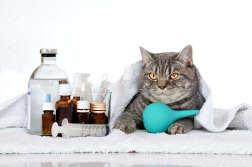Seks genetiske sygdomme hos katte