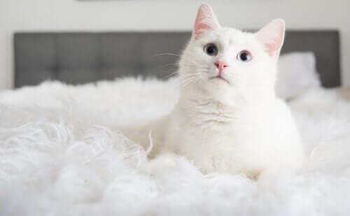 Hvid kat i seng