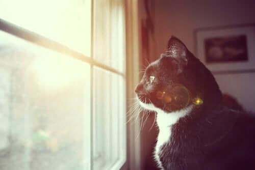 Kat, der stirrer ud af vindue