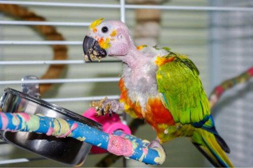 Papegøjer er eksempel på, at dyr kan lide af depression