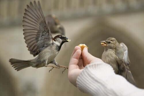 Person, der fodrer fugle