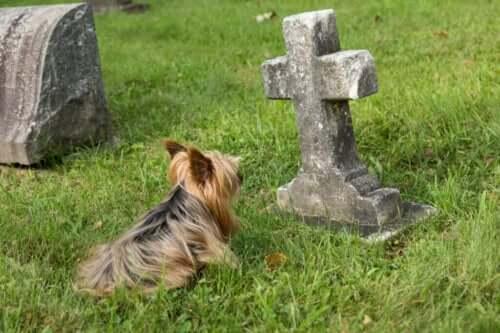 Ti tegn på, at en hund er ved at dø