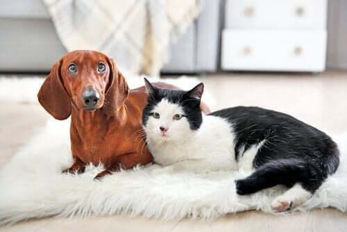 At miste et kæledyr: Det vil ikke være det samme uden dig