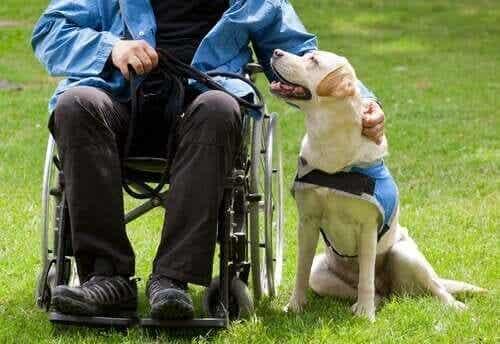 Hvordan hunde gør folks liv bedre