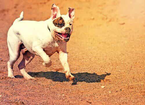 Hund løber væk