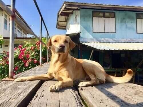 Regler for godt naboskab, når du har kæledyr