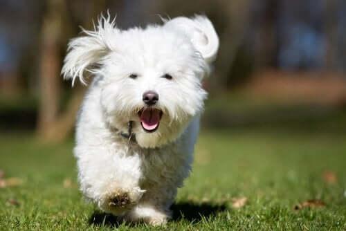 Hvorfor hunden løber væk, når du giver den en godbid