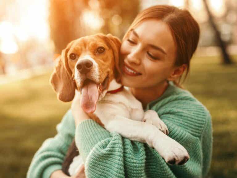 12 spørgsmål og svar om hundepleje