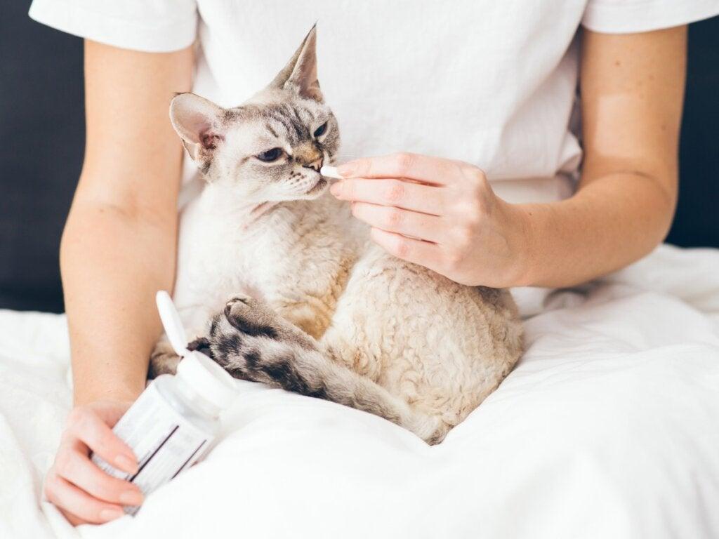 Buprex til katte: Dosering og bivirkninger