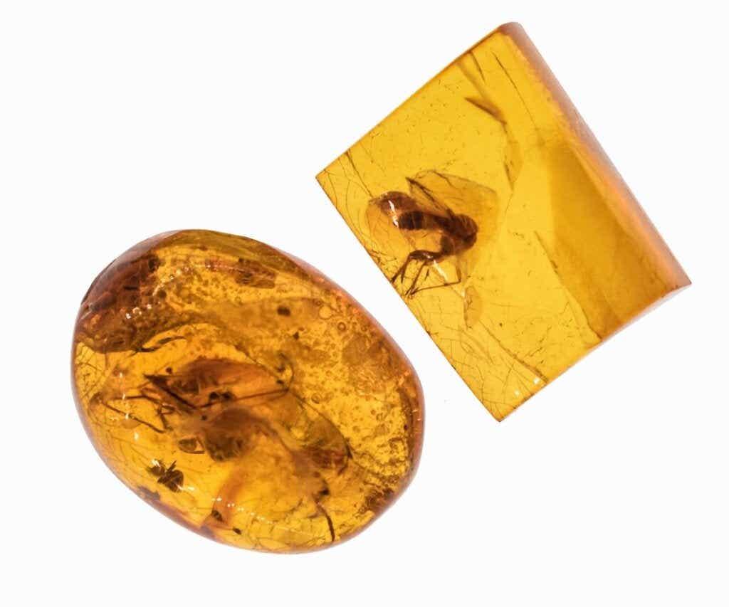 Helvede myrer: uddød men frygtindgydende